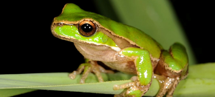 Earthwatch Student Expedition: Australia's Vanishing Frogs