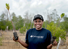 Mangroves prevent coastal erosion and are highly effective natural sinks for carbon.