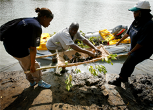 Team plants hundreds of mangrove trees on a beach near Gazi village in Kenya.