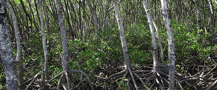 Test your skills in the mangrove jungle gym