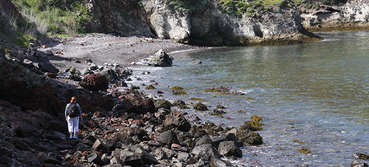 Help scientists measure and record rocky intertidal species and their abundance.