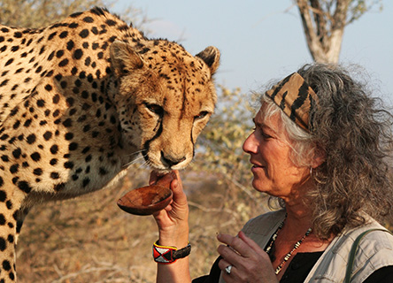 Dr. Laurie Marker with a cheetah at the CCF