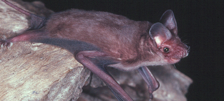 Earthwatch Expedition: Melbourne's Microbats, Australia