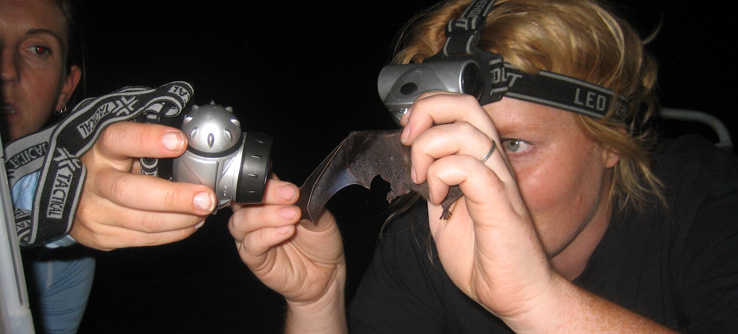 Earthwatch Student Expedition: Melbourne's Microbats, Australia