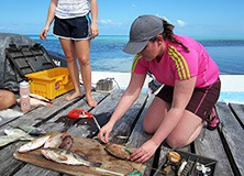 Mitsubishi staff measuring fish on Earthwatch project