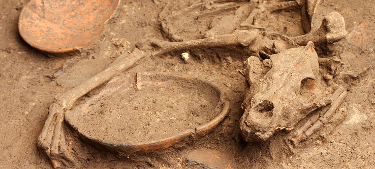 The remains of a dog, dubbed Samson, excavated by Earthwatchers.