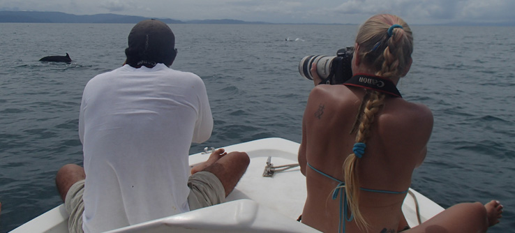 Research volunteers photographing a resident pod of dolphins, Costa Rica
