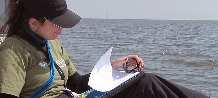 Data will be compared to loon data collected in Louisiana after the 2010 oil spill.