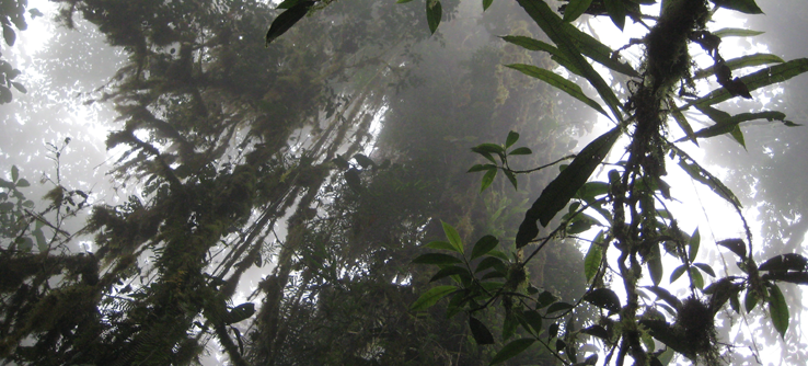 Rainforest vegetation, Ecuador
