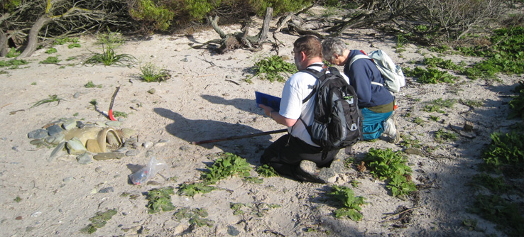 Volunteers conducting a penguin survey