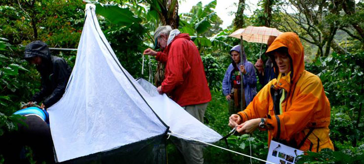 Researchers use a variety of methods to collect insects in Costa Rica