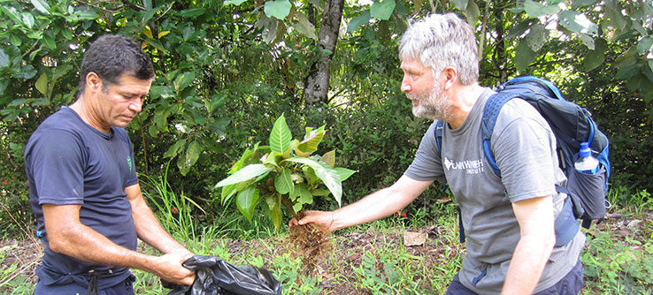 Conserving Wild Bees and Other Pollinators of Costa Rica