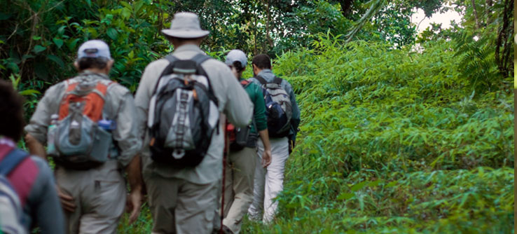 The team will hike into forest that few people have explored.