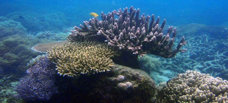 Earthwatch Expeditions: Recovery of the Great Barrier Reef