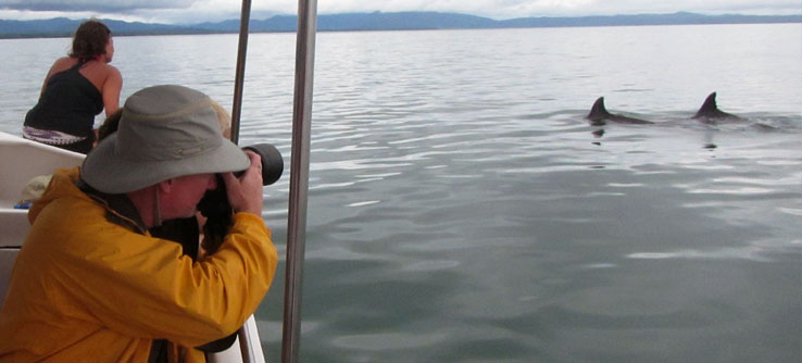 A volunteer photographs dolphins from the research boat.