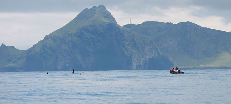 By understanding threats to killer whales, scientists can help to establish protection policies.