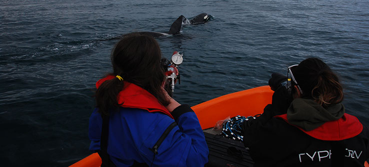 Help scientists to collect small skin and blubber samples from killer whales for analysis.