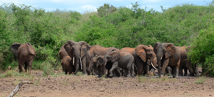 Sustainable agriculture could help humans and elephants to peacefully coexist in Kenya.