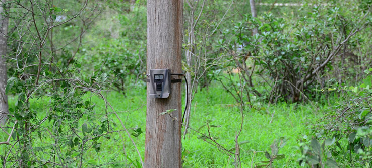 Collect and compare camera trap photographs from crop fields.
