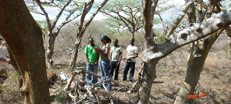 Monitor large, indigenous trees and record signs of damage by elephants.