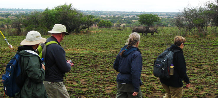 Volunteers photograph and observe rhino behavior in the field.
