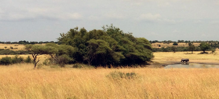 The wildlife reserve is a classic African savannah of mixed grasses spotted with trees.