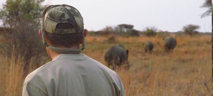 A researcher monitors rhino behavior in the field.