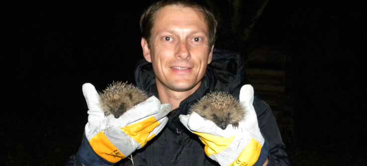 Researcher Dr. Richard Yarnell finds two hedgehogs on a survey.