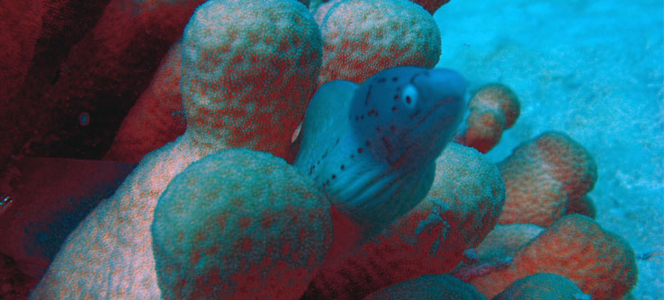 Coral reefs provide a home for thousands of species of fish.