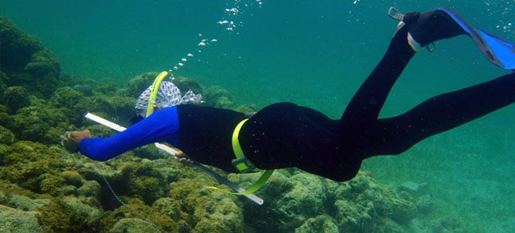 A snorkeler measures the dimensions of a reef.
