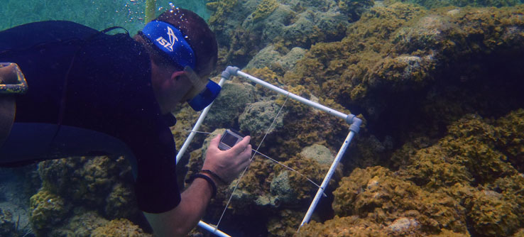 A volunteer compares coral cover to algae cover to assess reef health.