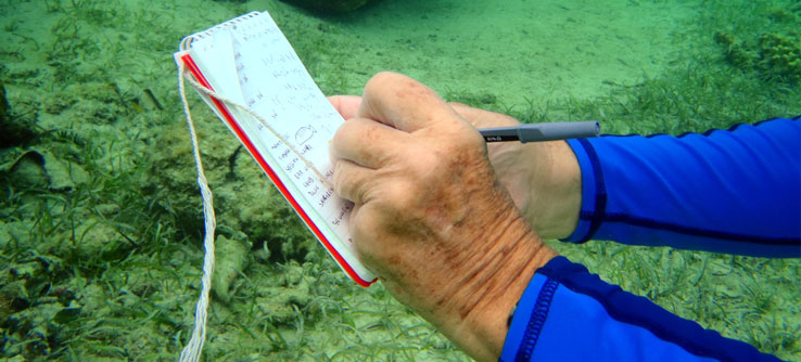 A volunteer records his observations underwater.
