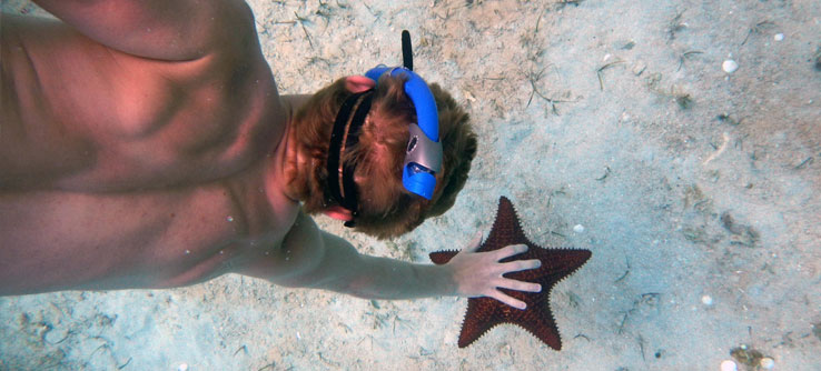 You'll encounter tropical wildlife like this sea star.