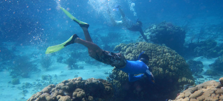 Snorkelers map reef characteristics.