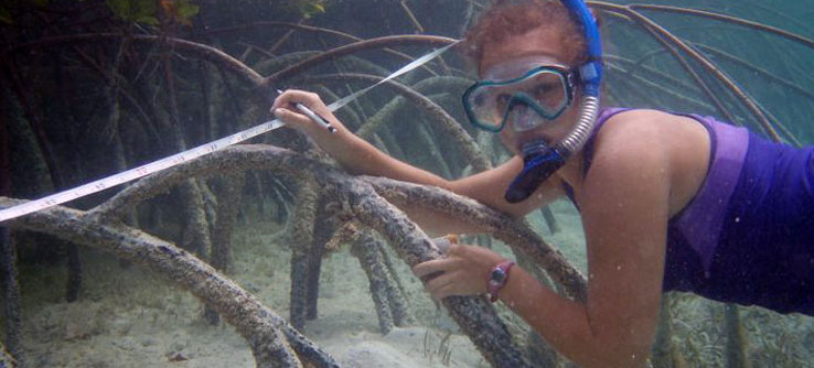 A snorkeler measures a mangrove creek.