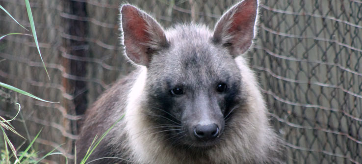 Local landowners often think of hyenas as pests.