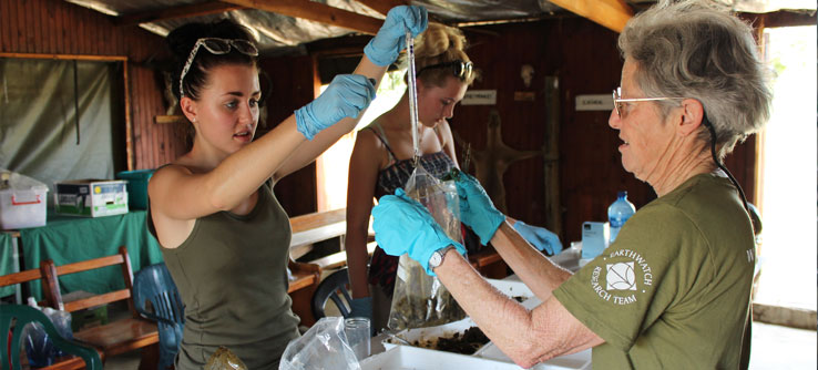 Volunteers weigh scat samples to analyze what animals are eating.