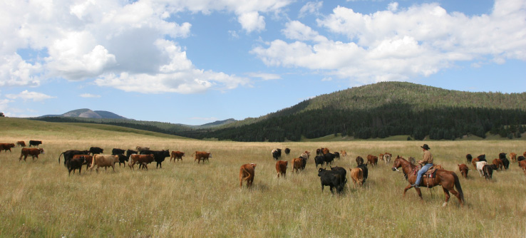 Cattle ranchers and grassland, Valles Caldera National Park, New Mexico