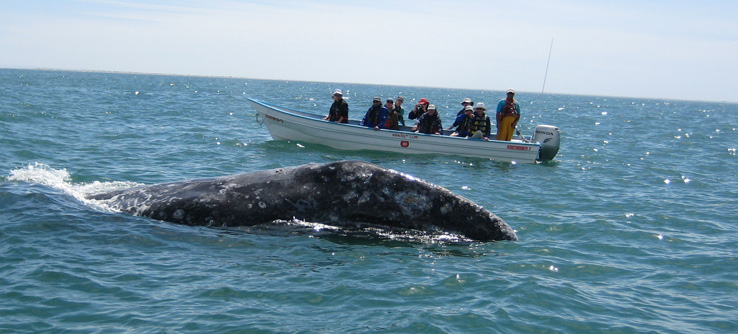Volunteers recording whale behavior from research boat