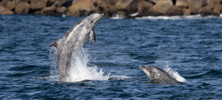 Photograph marine mammals, recording their position and behavior.