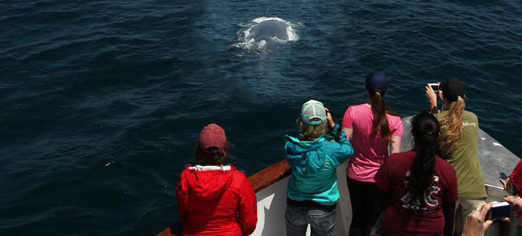 Earthwatch volunteers photograph a blue whale as it surfaces
