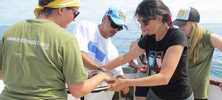 Field teams collect plankton from a transect set up along the shore.