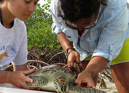 Annabelle has a decade of research experience with sea turtles and other marine life in the Bahamas