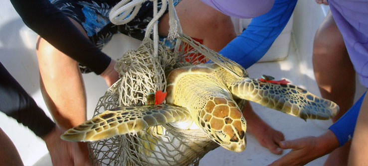 Earthwatch Expedition: Swimming with Sea Turtles in the Bahamas