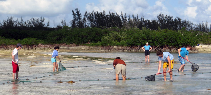 The team uses a seine net to catch turtles at the mouth of a creek.