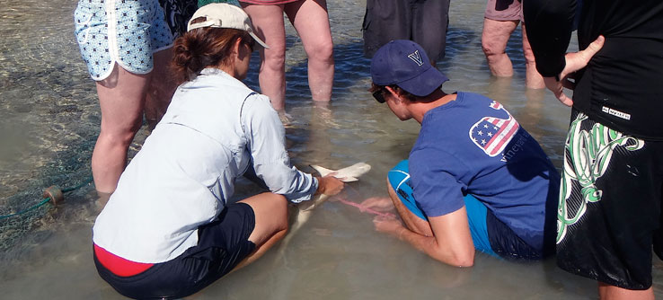 Lead scientist Annabelle Brooks points out a reef shark.