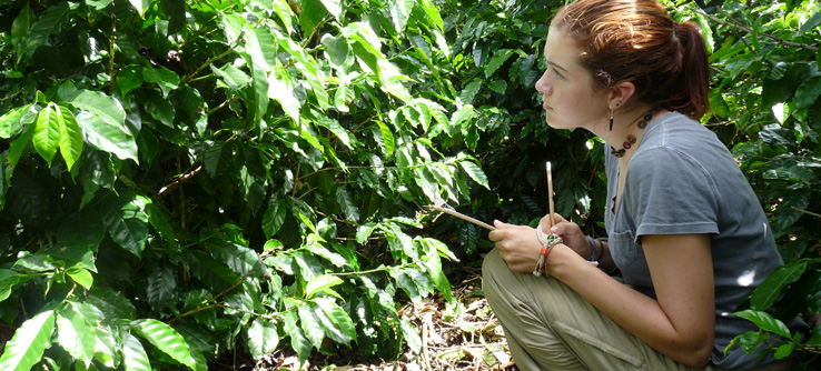 Volunteer assessing plant health at a Costa Rican coffee farm.