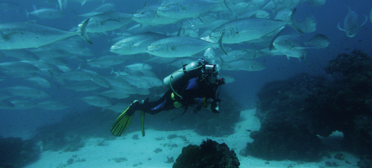 Scuba diver on a marine conservation project in the Great Barrier Reef, Australia