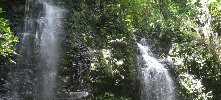 A waterfall near the Soltis Center, home base for Earthwatch teams.