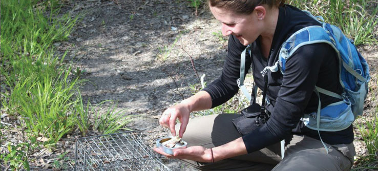 An Earthwatch scientist baits a trap to find out what animals live in the forest.